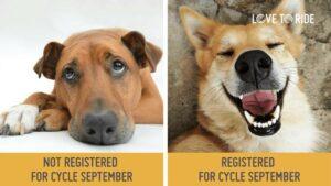 Sad dog not registered for Cycle September, happy dog registered for Cycle September.